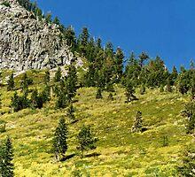 Yosemite 87 by jonvin