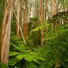 Tarra-Bulga National Park by Michael Matthews