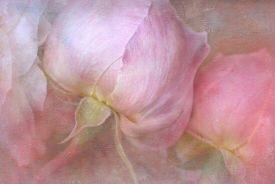 beautiful buds by Teresa Pople