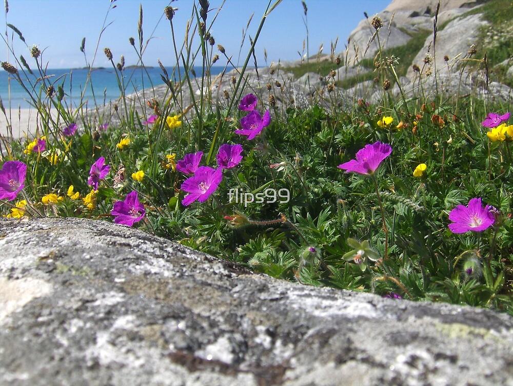 Coastal wildflowers by flips99