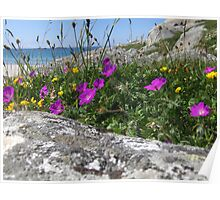 Coastal wildflowers Poster