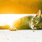 cat in the sunrise by BellatrixBlack