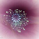 Poppy detail by Photos - Pauline Wherrell
