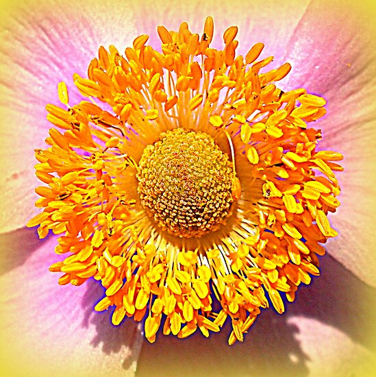 Japanese Anemone by The Creative Minds