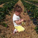 Strawberry Fields by Alan Rodmell