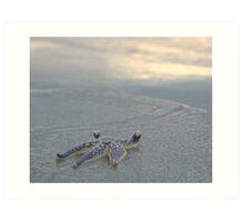 Seastar by the Sea Shore Art Print