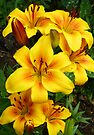 Yellow Lilies by LoneAngel