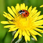 Ladybird 04 by Magic-Moments