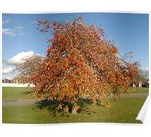 Tree with red berries Poster