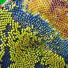 Eden Project Sunflower by Amanda Clegg