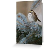 White-throated Sparrow 2 Greeting Card