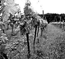 Vignoble trois by Wintermute69