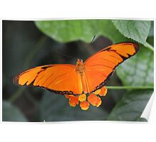 Color Match with Julia Heliconian - Dryas iulia Poster