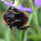 Bumble Bee 05 by Magic-Moments