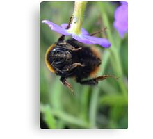 Bumble Bee 05 Canvas Print