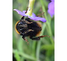 Bumble Bee 05 Photographic Print