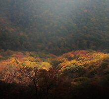 heart of the forest by dc witmer
