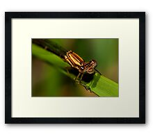 I guess that Damsels can really fly Framed Print