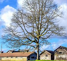 Old Buildings and Tree by Jason Butts