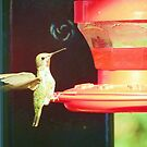 Female Anna's Hummingbird by GreyFeather