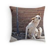 Stray Dog 2 Throw Pillow