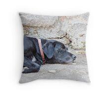 Stray Dog 5 Throw Pillow