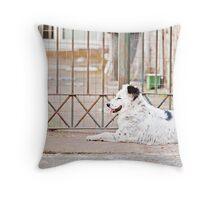 Stray Dog 7 Throw Pillow