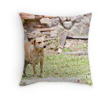 Stray Dog 8 Throw Pillow