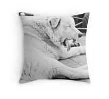 Stray Dog 10 Throw Pillow