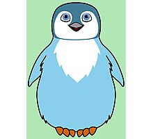 Light Blue Baby Penguin Photographic Print