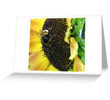 Bumble Bee in Action Greeting Card