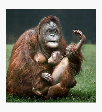 Orangutan Mother and Baby Photographic Print