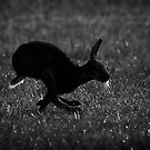 Hare Silhouette by Patricia Jacobs CPAGB LRPS BPE4
