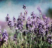 Vintage Lavender by Amanda White