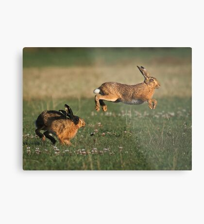 Hare Chase Metal Print