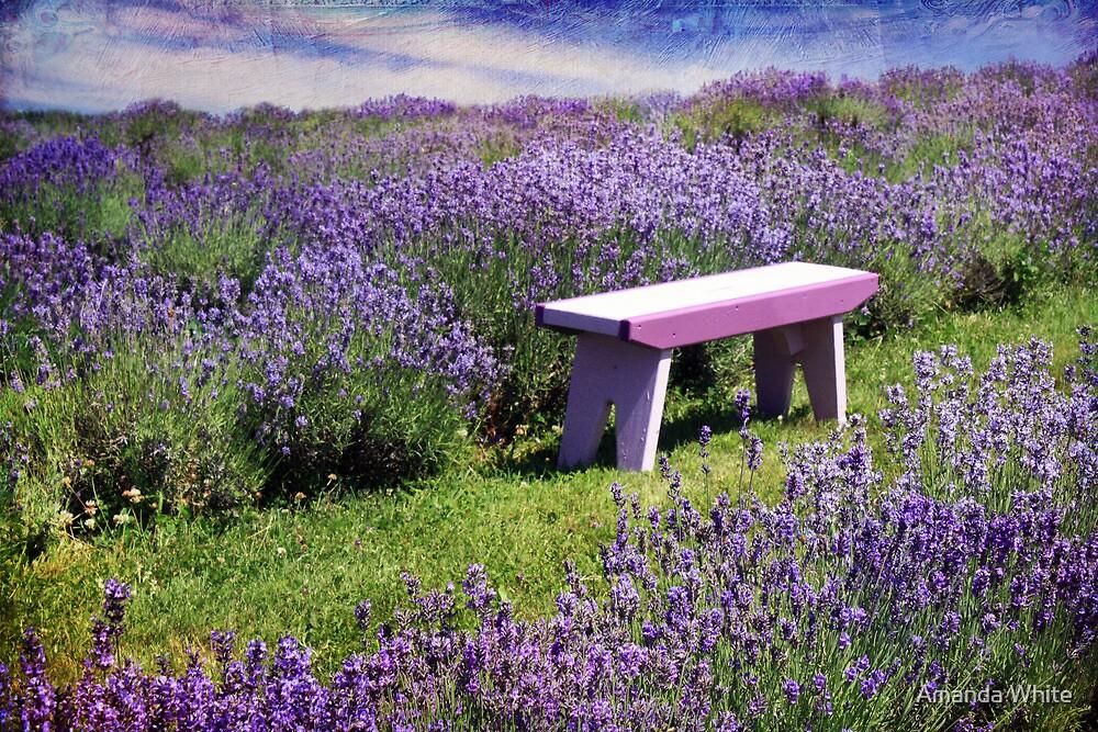 Sitting amongst the Lavender by Amanda White