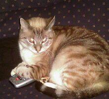 My Cat Hogging The Controler by TKUsitalo