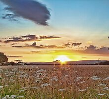 Sundown Over North Downs by Dave Godden