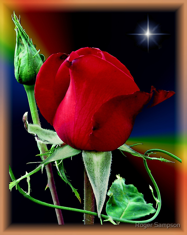 A Rose and a Star by Roger Sampson