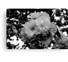 PLEASE VIEW LARGE -Cherry Blossom Tree in B&W   ^ Canvas Print