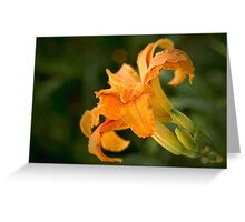Fancy daylily Greeting Card