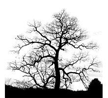 Electric Tree Photographic Print