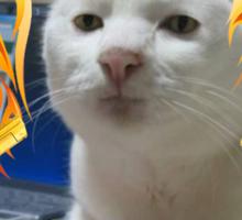 Atomic Cat Sticker