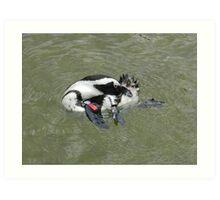 african penguin 2 Art Print