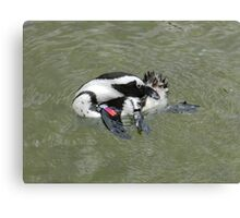 african penguin 2 Canvas Print