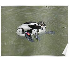 african penguin 2 Poster