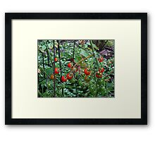 Fried green tomatoes Framed Print