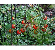 Fried green tomatoes Photographic Print