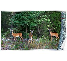 Three Deer And Mr Tree Poster