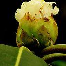 Flora by photoj